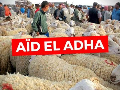 prix mouton aid algérie
