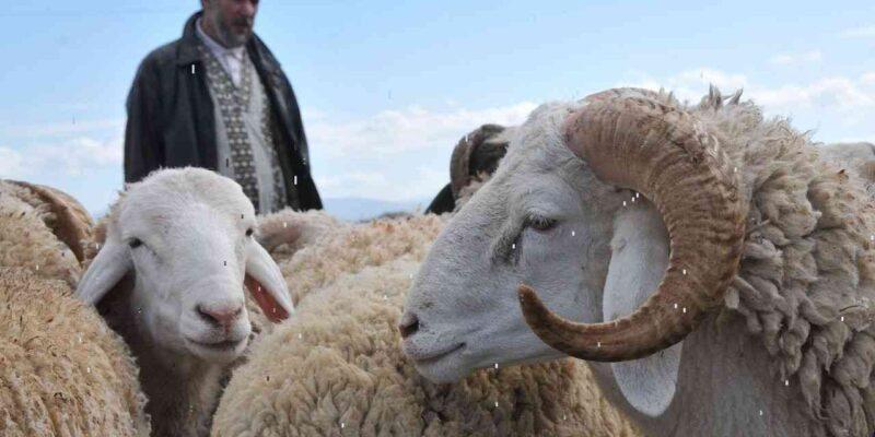 Aïd prix mouton