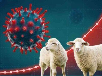 Aïd Adha marché mouton