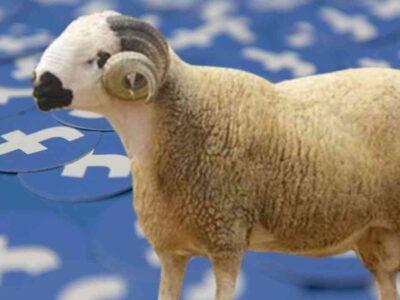 Algérie achat mouton Facebook