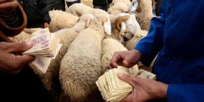 Aïd Kebir Algérie Moutons