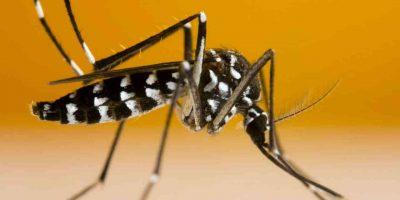moustique tigre Algérie