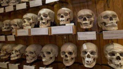 guerre Algérie restitution crânes