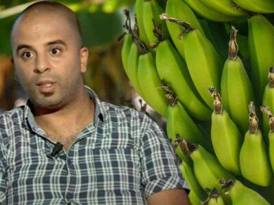 bananes Algérie